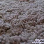 [特力屋] 秋冬必備 艾微素色輕量地毯 駝棕跟木地板顏色好搭好漂亮