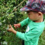 [宜蘭] 橫山頭之旅 太陽埤果園 當個小農夫 採果趣